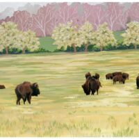 Shelby Farms Bison – small version no watermark
