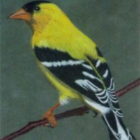 2015 – Goldfinch on Suedeboard