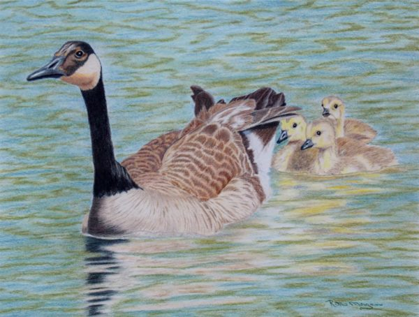 2016 – Canadian Geese